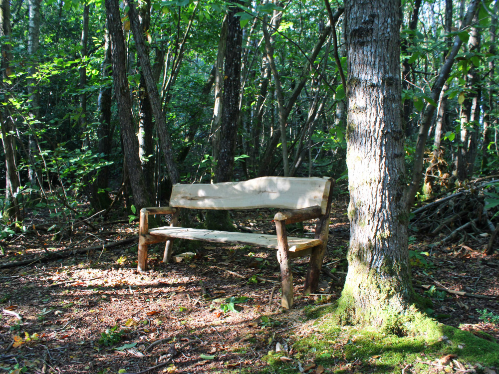 A rustic bench located in a private spot in the wood