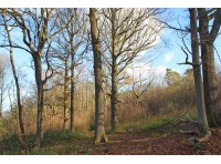 West Pullens Wood - SOLD