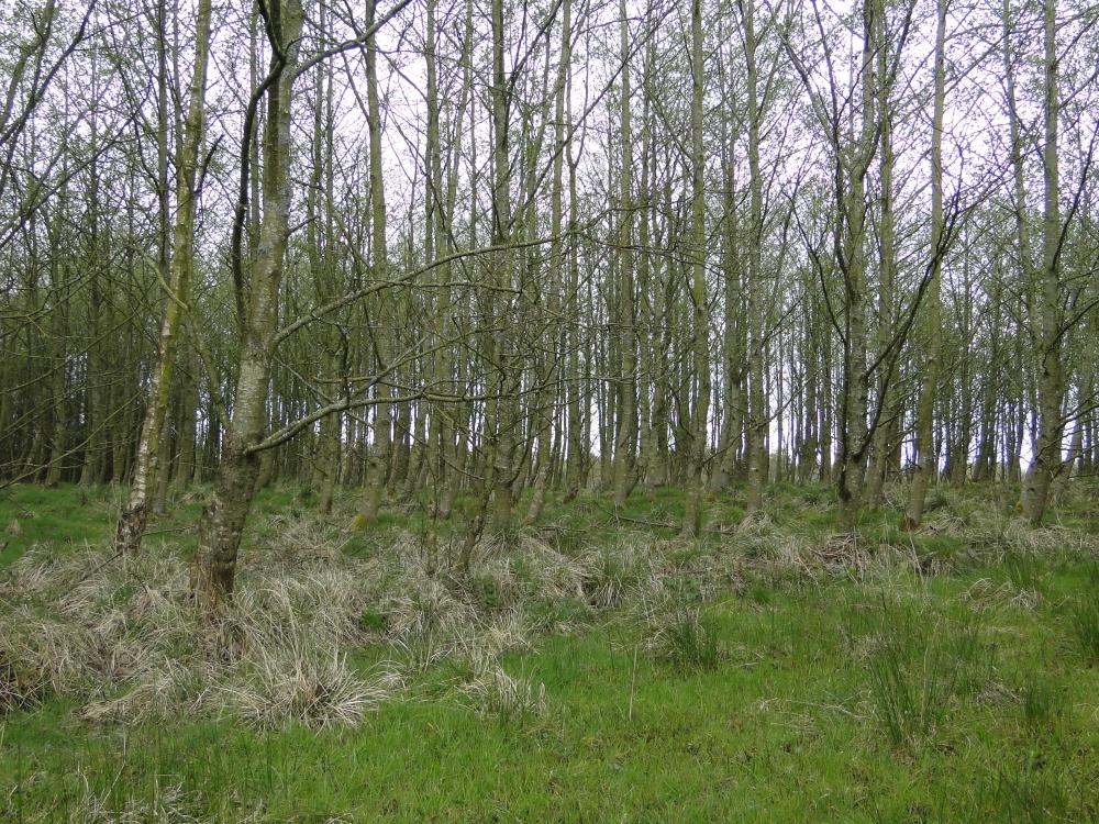 Maturing trees