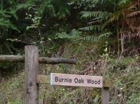 Burnie Oak Wood - SOLD