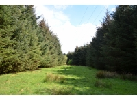 Open area between spruce plantations