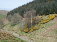 Glenmuir Wood