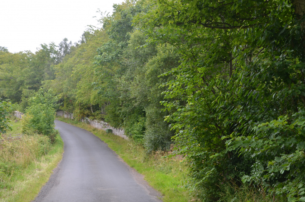 Mixed and varied woodland