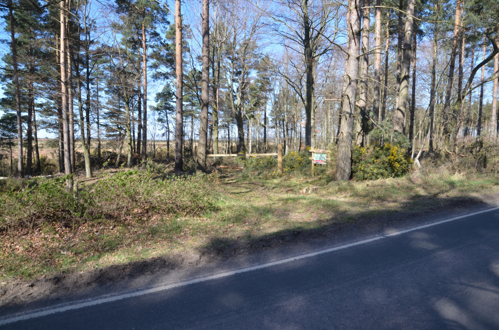 Nungate Wood