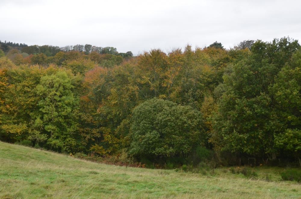 Towerburn canopy