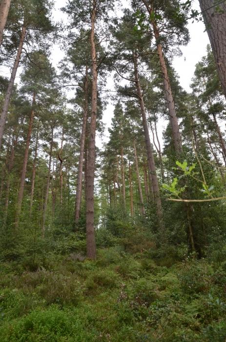 Victus Wood Dilston Near Hexham Northumberland