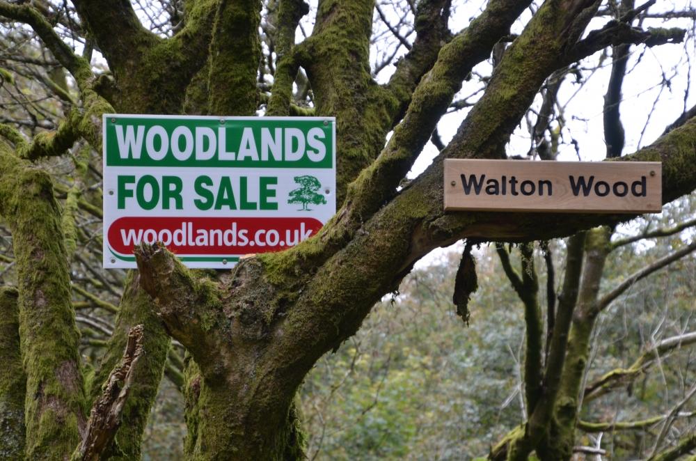 Walton wood