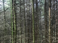 View into the conifer part of the wood