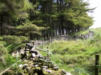 Old dry stone wall boundary