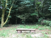 Bench in a clearing near the entrance