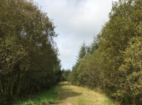 Good forestry track leading to Coed Cwcw