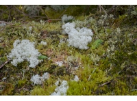 Various moss and lichen speeches can be found within the woodland