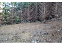Large hardstanding camping/bbq area within the woods