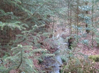 A small stream close to northern boundary