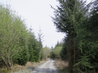 Track leading to Coed Hedd