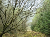Footpath through wood from the parking area