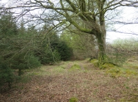 Open flat area ideal for camping