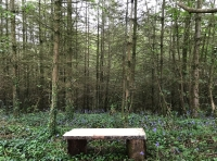 Bench amongst the bluebells