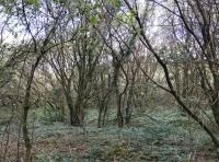 View into the coppice part of the wood