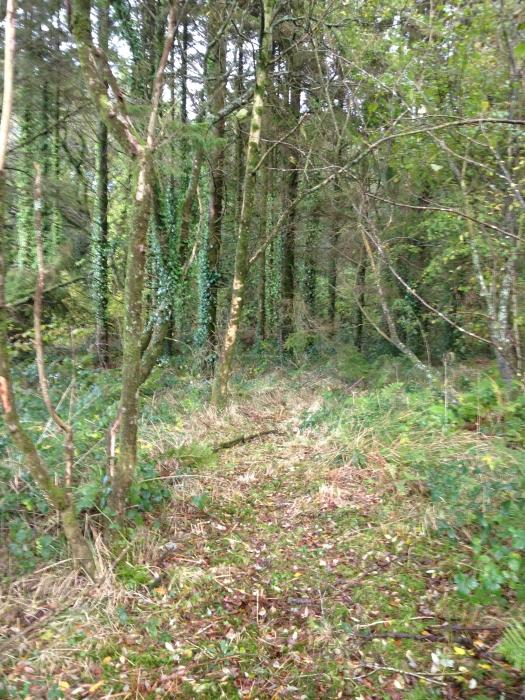 Coed Wern Wern Wood Near Llansteffan Carmarthenshire