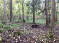 Bench in a small clearing