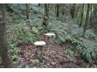 Woodland stools located in the northern corner