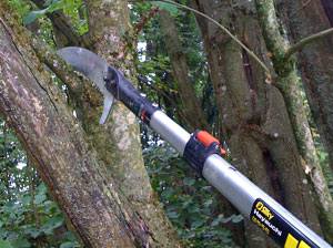 Why and how should you prune your woodland trees?