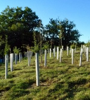Tree planting - is it always a good thing?