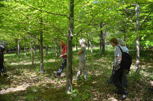 A 'SWOG' visit to Ferriby Wood
