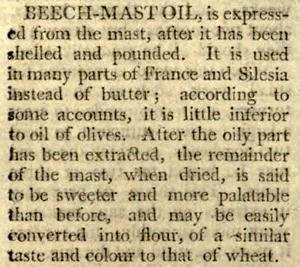 Beech-mast-oil-1