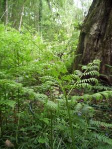 Bracken and woodlands
