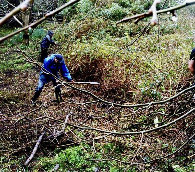 Volunteers clearing Rhododendron at Tortworth Arboretum