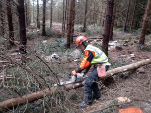 Chain saw use and training