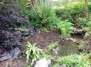 Planting native bulbs within a woodland setting……
