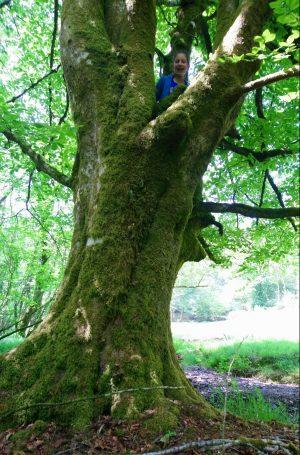 Hatherland Woods – Why buy a Woodland?