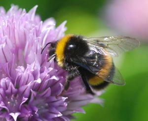 Bumblebee update - brief notes