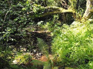 Elver stream