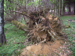 Robustness and the resilience of woodlands.