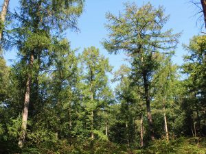 Buying a woodland through a SIPP - Self-Invested Personal Pension.