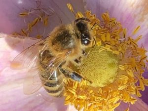 The bees' search for nectar