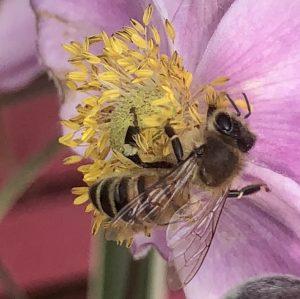 Viruses, Varroa and honey bees.