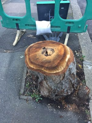 Sheffield - the battleground for those who care about street trees and woodlands
