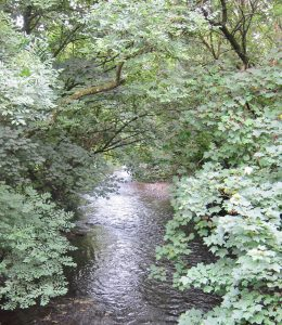 Trees and streams