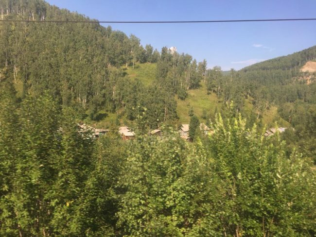 woodland and forest as seen from the Trans Siberian railwa