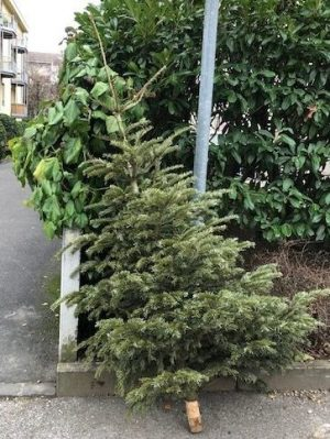 another abandoned Christmas Tree