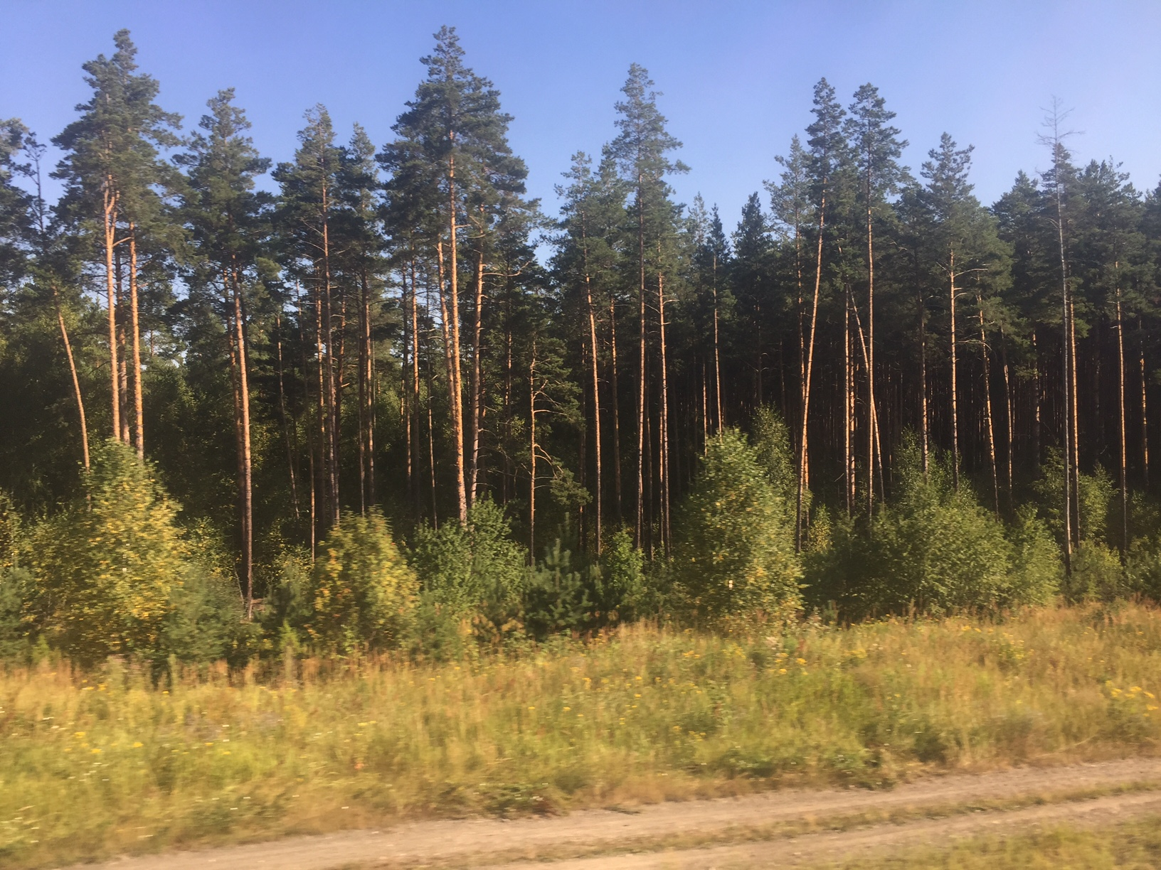 Russian Forestry And Siberian Pine Woodlands Co Uk