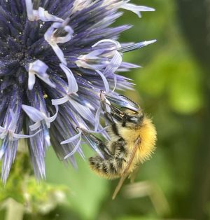 Heat, bumblebees and foraging