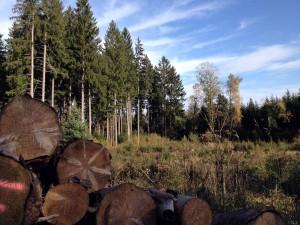Jura Swiss forest