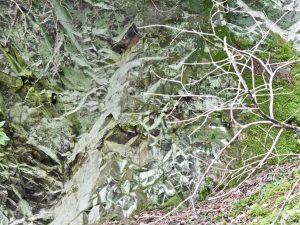 The geology of your woodland: looking for fossils in the rocks