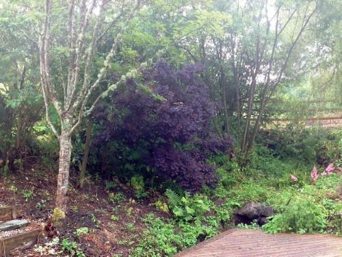Photo of woodland area